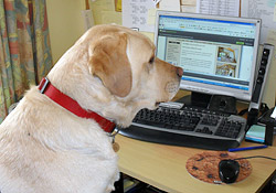 Dog-friendly receptionist